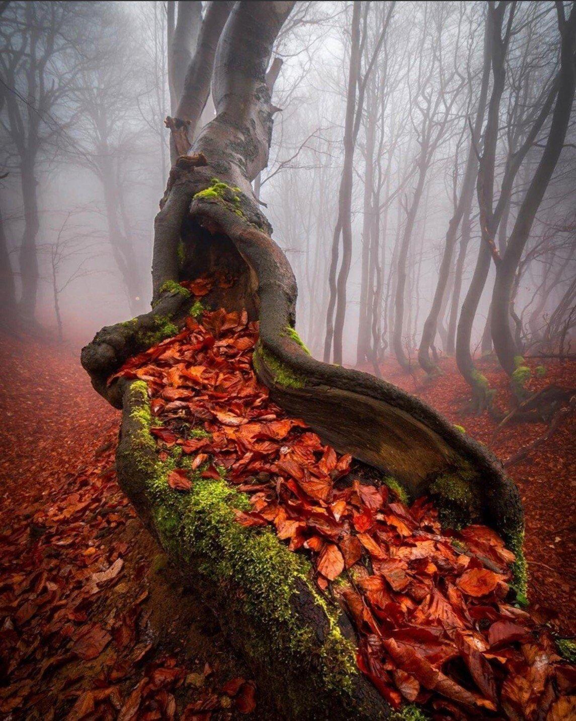 cz tree leaves.jpeg