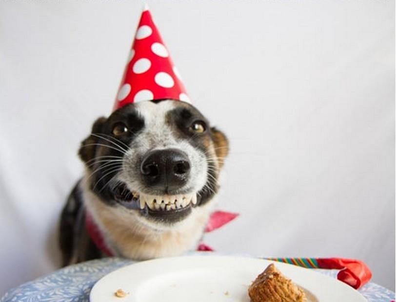 dog birthday.jpeg