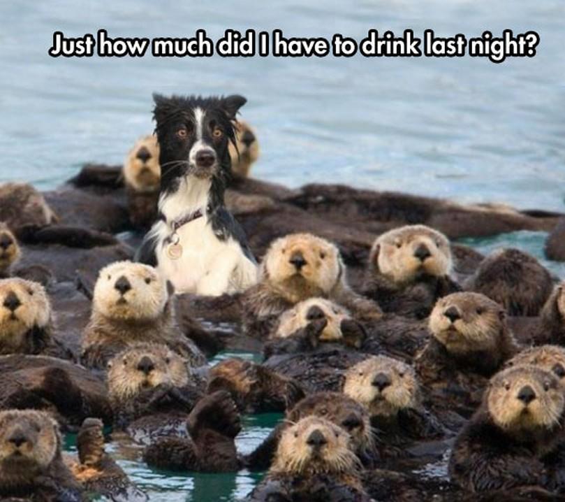 dog drink.jpeg