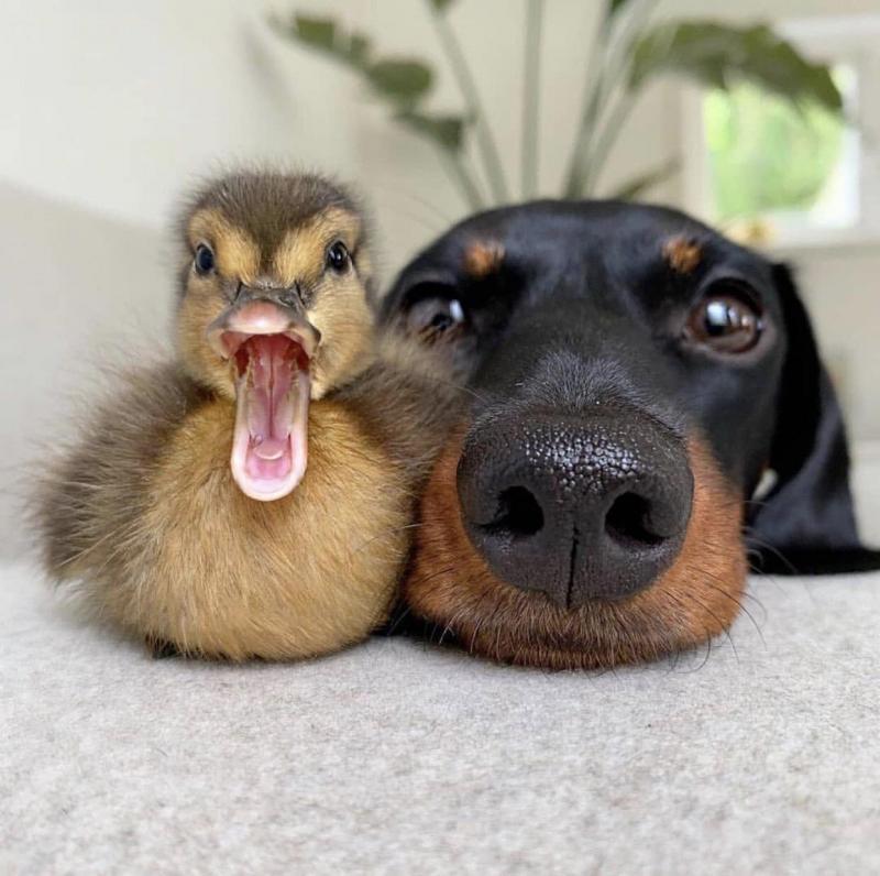 dog duckling.jpeg