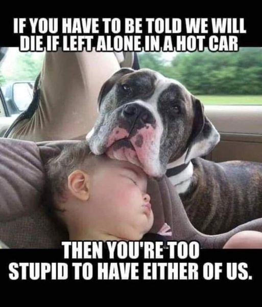 dog hot car.jpeg