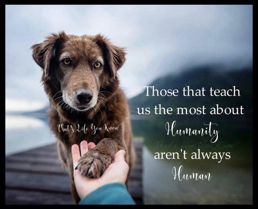 dog humanity.jpeg