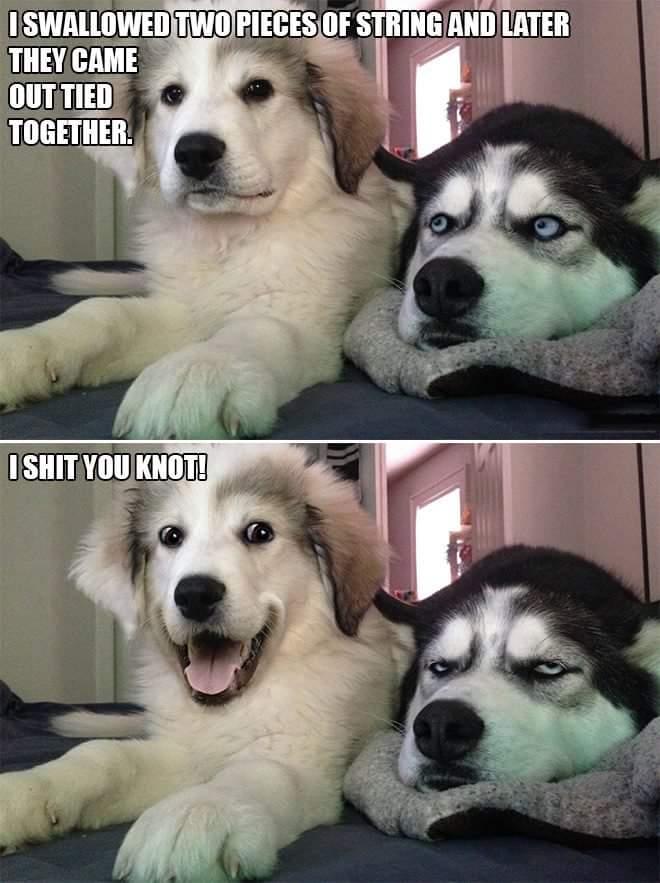 dog knot.jpeg
