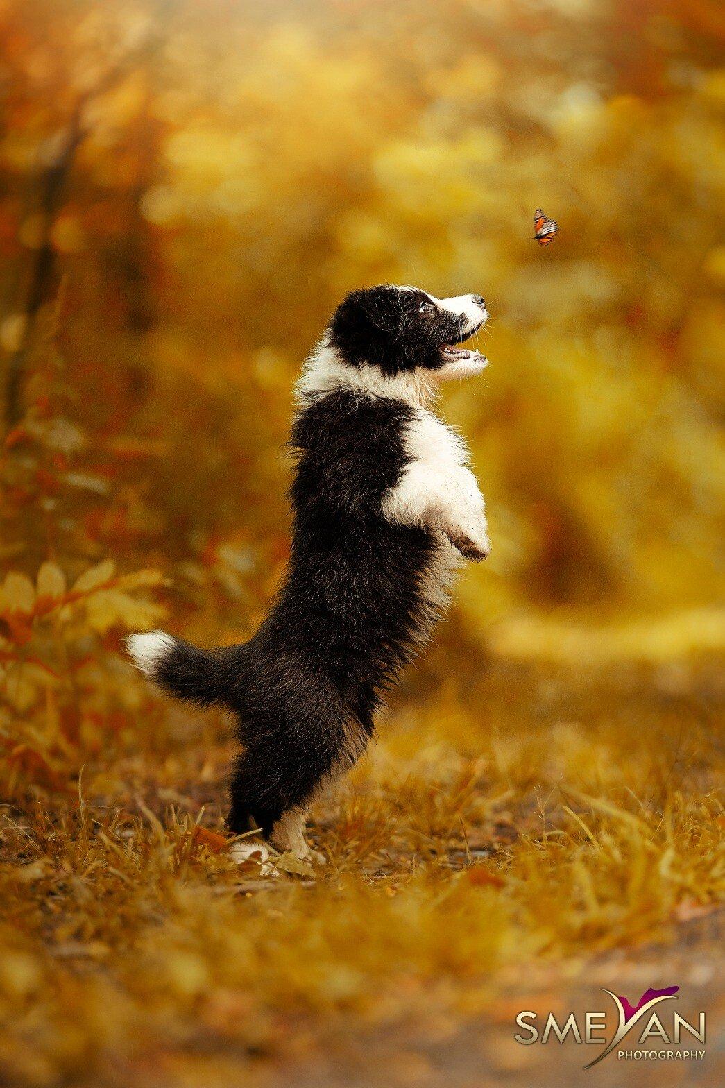 pup butterfly.jpeg