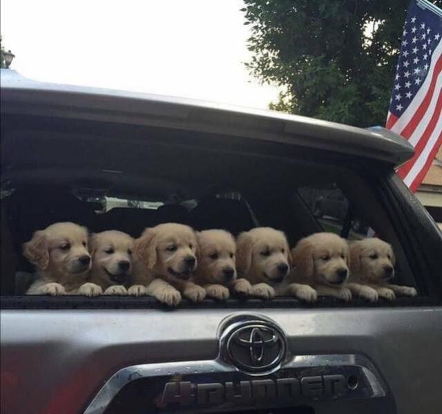 pups back window.jpeg