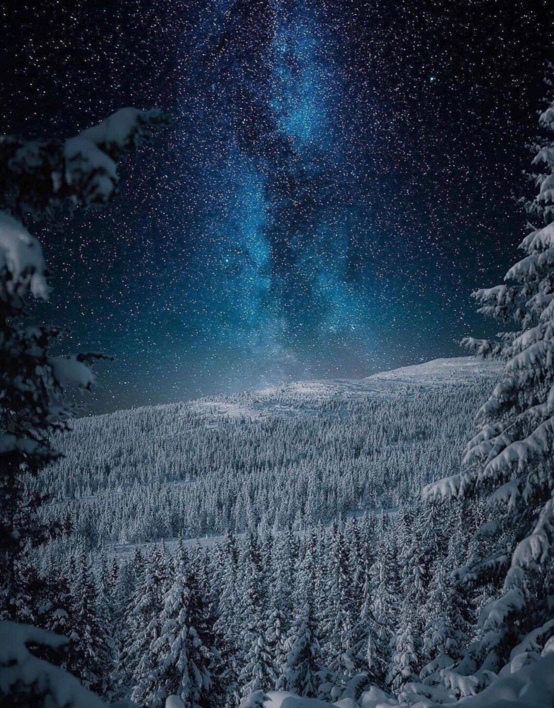 snow forest.jpeg