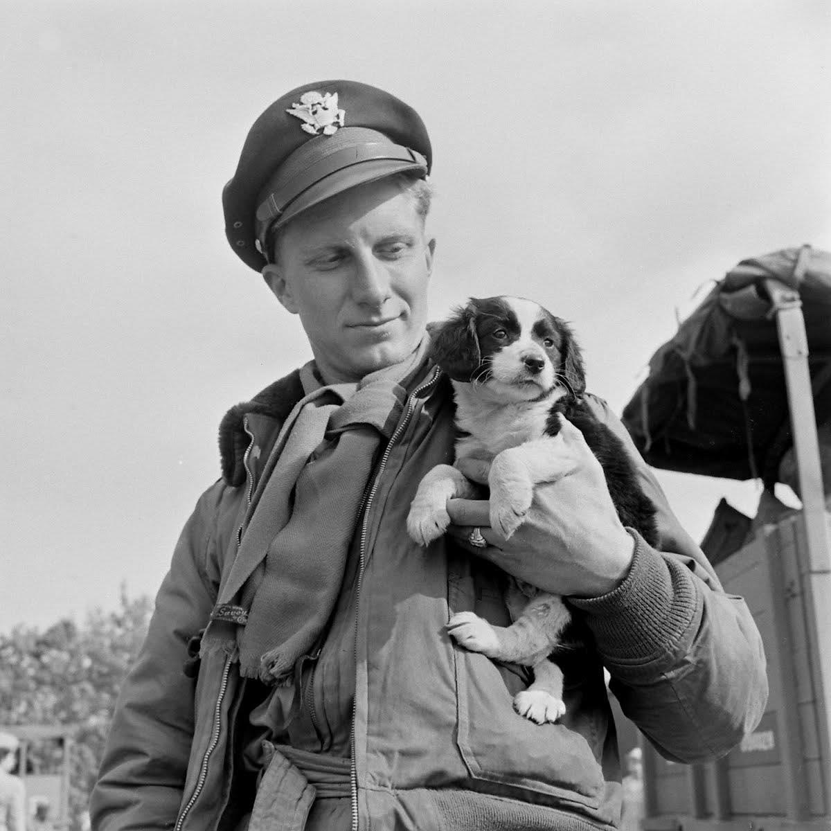soldier puppy.jpeg