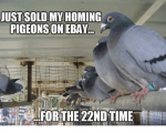 just-sold-my-homing-pigeons-on-ebay-for-the-22ndtime-8407447.png