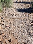Yeti Snake.jpg