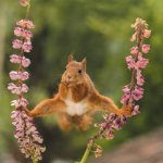 squirrel-does-the-splits.jpg
