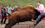 jackass-3d-buffalo-attack-14-9-10-kc.jpg