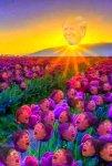 TRUMP Sunshine.jpg