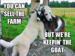 goat.jpeg