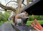 funny-squirrels-funny-squirrel-picture-04-funnypica_com_.jpg
