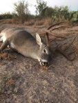 Deer down 2020.jpg