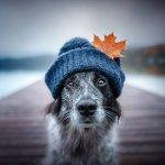 dog hat.jpg