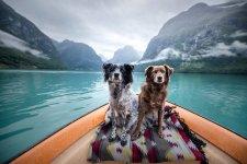 dog canoe.jpg