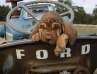 pup tractor.jpg