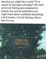corvid testing.jpg