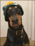dog hat.png