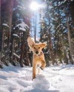 dog snow.jpeg