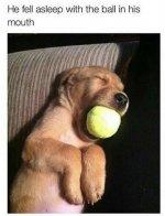 dog ball.jpeg