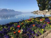 flowers lake.jpeg