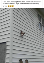 dog vent.png