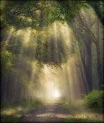 forest path.png