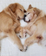 2dogs.png