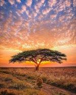lion tree.jpeg