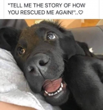 rescued dog.png