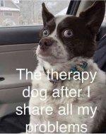 therapy dog.jpeg