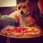 dog pizza.jpeg
