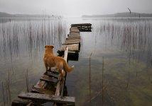 dog lake.jpg